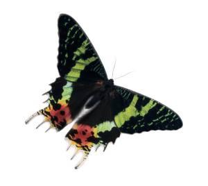 moth again