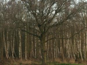 Woods England